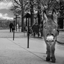 """Henri"" takes five from giving childern rides in Paris's Luxembourg Gardens."
